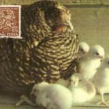 Ilustrata maxima, fauna, gaini - Timbre Romania
