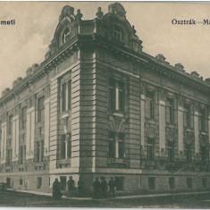 Carti Postale Romania 1904-1918, Necirculata, Printata - IPV 565 SATU MARE