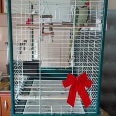 Papagal - Marele ALEXANDER + colivie, de vanzare