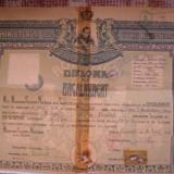 Diploma/Certificat - Diploma de bacalaureat