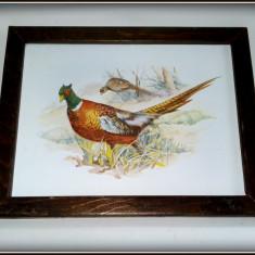 Arta din Metal - Tablou vechi - litografie pe tabla emailata - tematica fauna - fazani