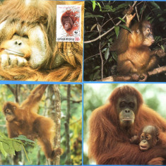 MAXIME STRAINE WWF SET COMPLECT ANIMALE MAIMUTE INDONEZIA 1989