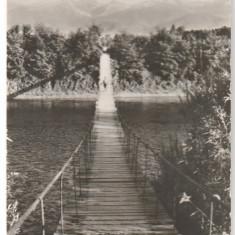 Avrig 1967 - pod peste Olt - Carte Postala Transilvania dupa 1918
