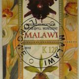 Colita flori Malawi 2010 (278)