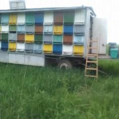 Vand pavilion apicol - Apicultura