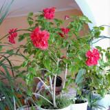 Plante si flori mediterane