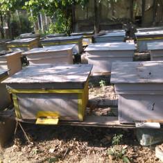 Stupi de albine - Apicultura
